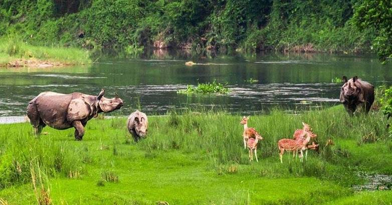 safari-Chitwan- National Parks in Nepal