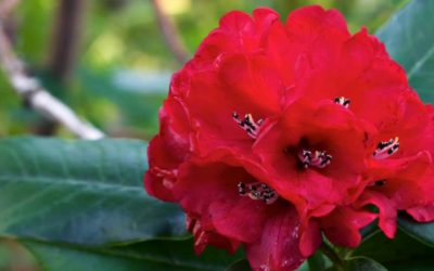 Flora and Fauna in Nepal- One Reason on Why People come to Nepal